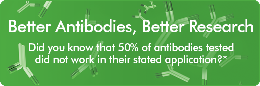 Better Antibodies, Better Research