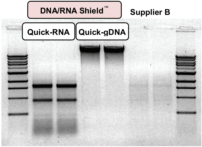 Nucleic Acid Purification DNA RNA Shield