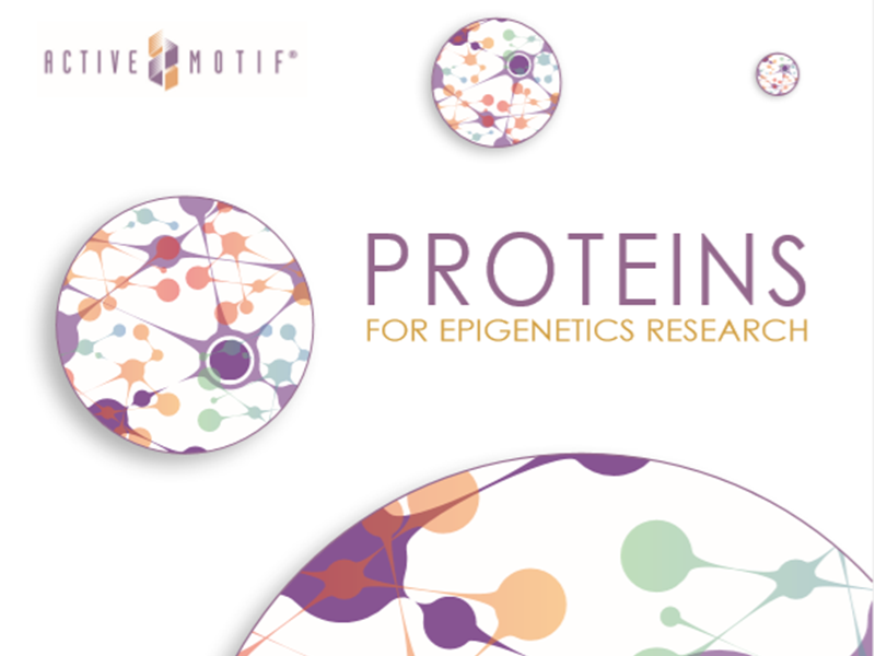 Download Proteins for Epigenetics Research brochure