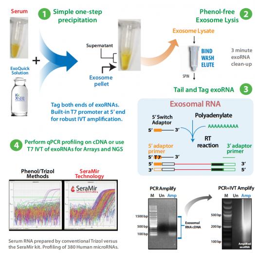 Exosome RNA Amplification & Profiling - SeraMir™