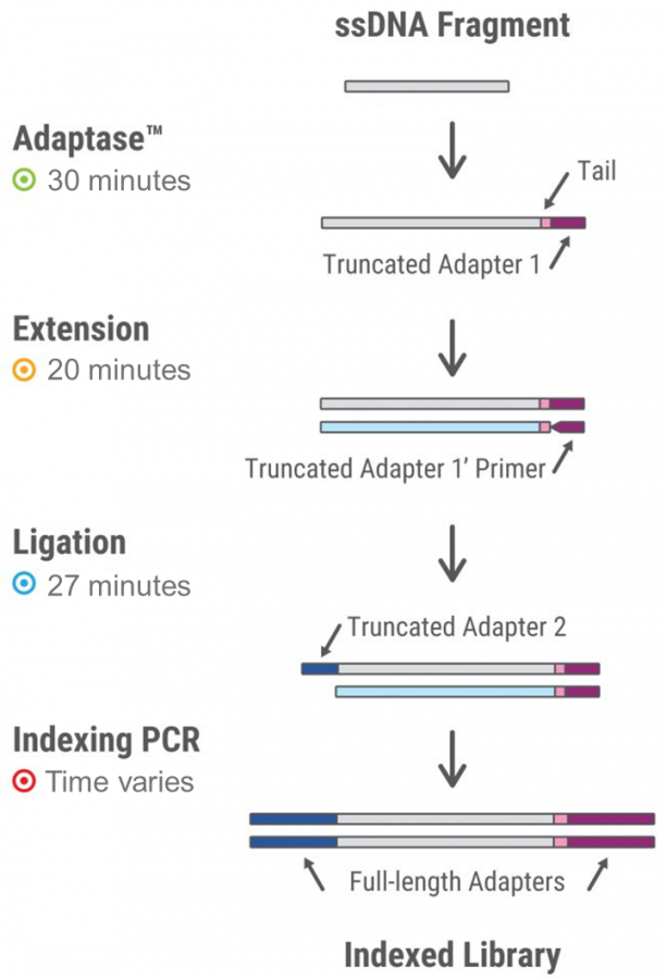 Accel-NGS 1S DNA Library Kits workflow
