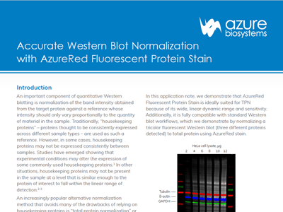 Download: Accurate Western blot normalisation