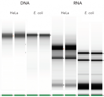 Direct-zol DNA/RNA Purification