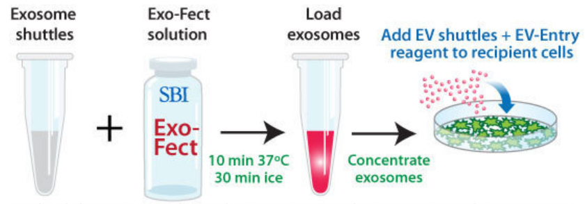 Quickly and easily load cargo into isolated exosomes -- EV Shuttle Kit