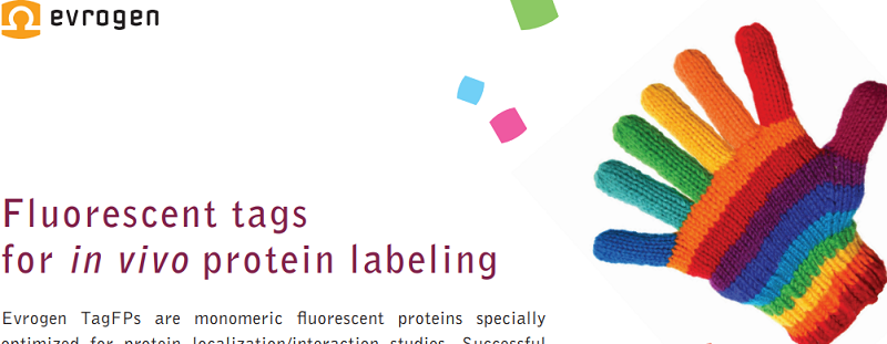 Download in vivo protein tag flyer
