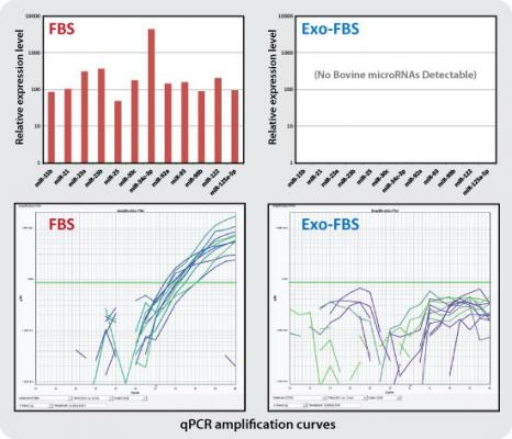 Greatly Reduced Levels of Bovine Exosomes with Exo-FBS
