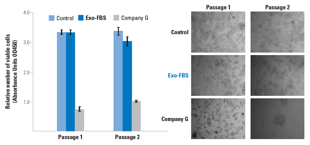 HepG2 cells were grown in media containing either standard FBS (control), Exo-FBS, or Company G's exosome-depleted FBS. Data is shown after one and two passages and illustrates that Exo-FBS provides a higher number of viable cells (left panel, viability assessed using a CCK-8 assay) and a healthier cell morphology (right panel) than Company G's product.
