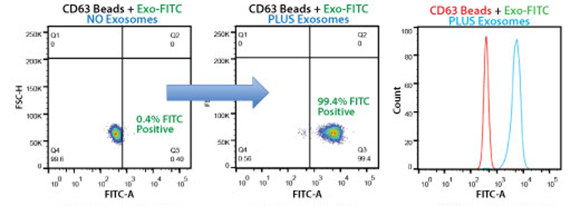 Bead flow separation data for exosomes secreted by HEK293 cells and captured using the CD63 Exo-Flow Capture Kit.