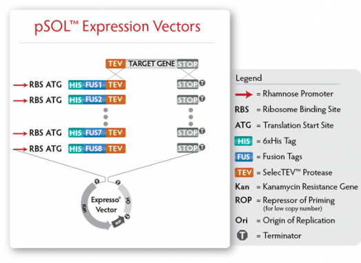 Expresso® Solubility and Expression Screening System Expression Vectors