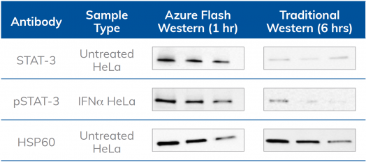 Azure Flash Western kit produces more sensitive detection than the traditional protocol with over 90% of antibodies