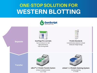 GenScript: One-stop solution for Western blotting