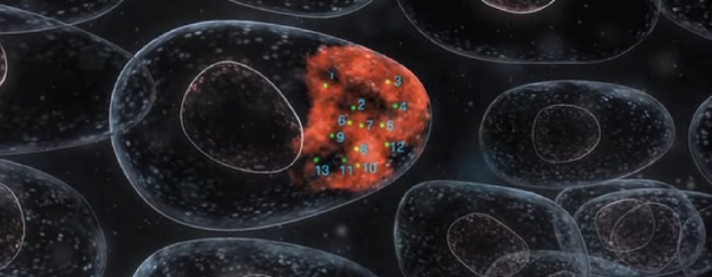 Video: How Stellaris RNA FISH technology works