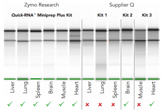 High-quality RNA was consistently isolated with the Quick-RNA™ Miniprep Plus Kit (left), but not with Supplier Q kits (right)