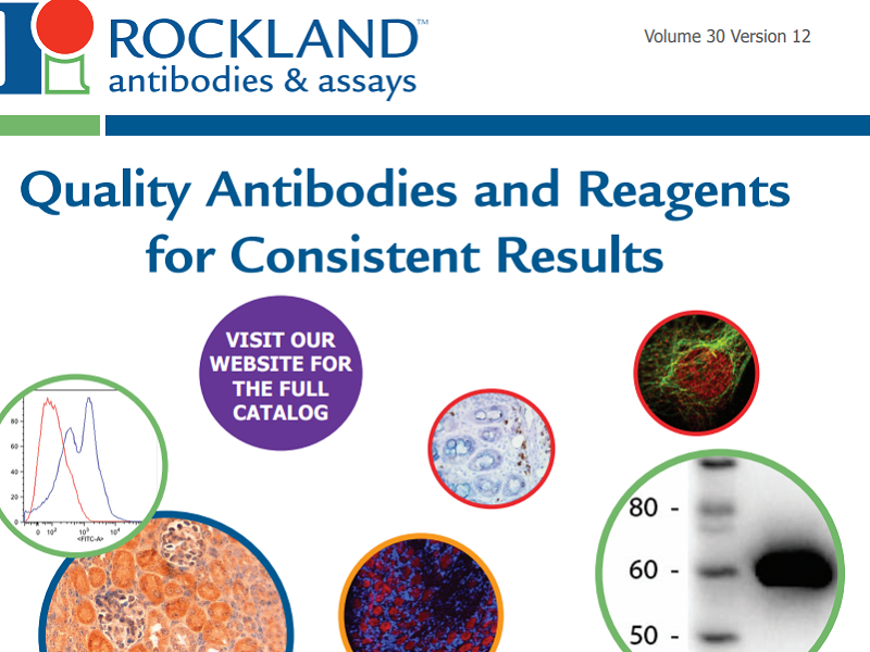 Download Rockland antibody brochure