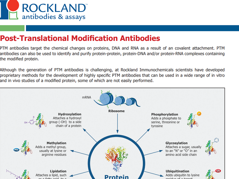 Download post-translational modification antibodies brochure