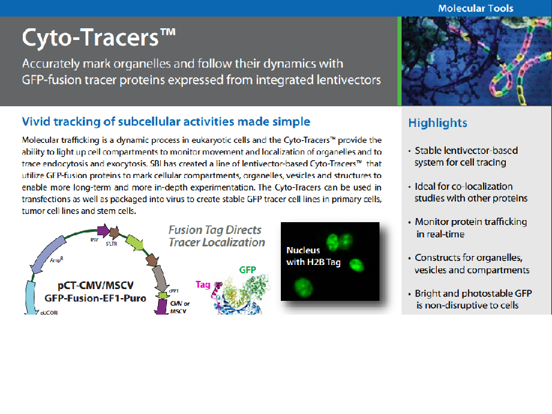 Download: Cyto-Tracers subcellular activities flyer