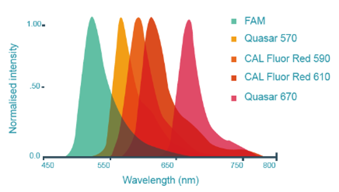 Stellaris RNA FISH probes available in a wide variety of fluorophores in visible spectrum