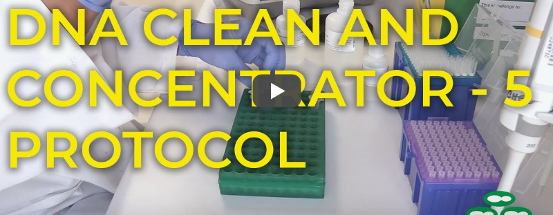 Video: DNA Clean and Concentrator protocol