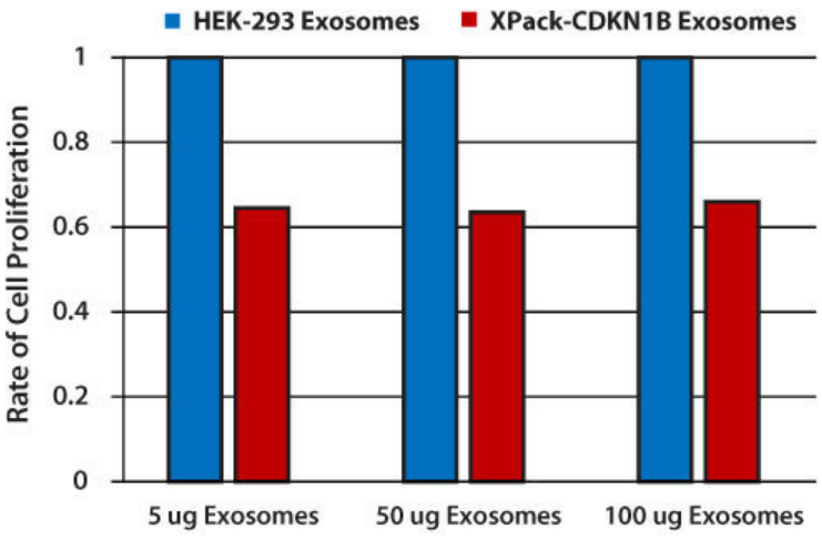 Pack-CDKN1B exosomes reduce cellular proliferatio