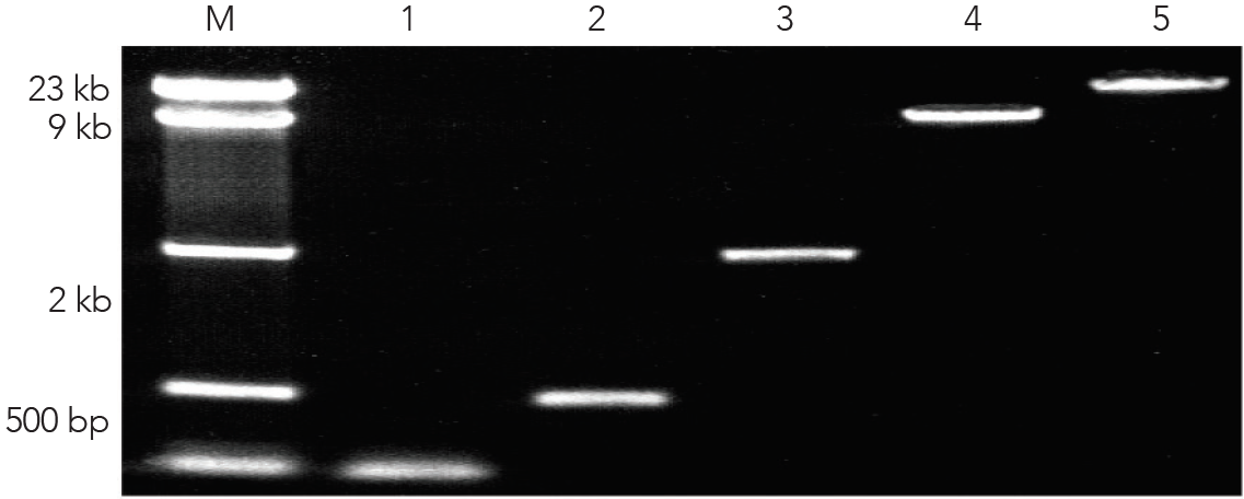 Zymoclean boosts the recovery of DNA from agarose gels to >80%